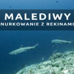 Nurkowanie z rekinami na Malediwach – Miyaru Kandu – Fulidhoo