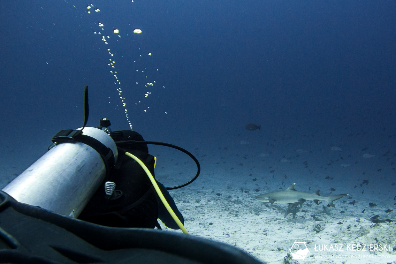 nurkowanie na malediwach thulusdhoo rekin shark