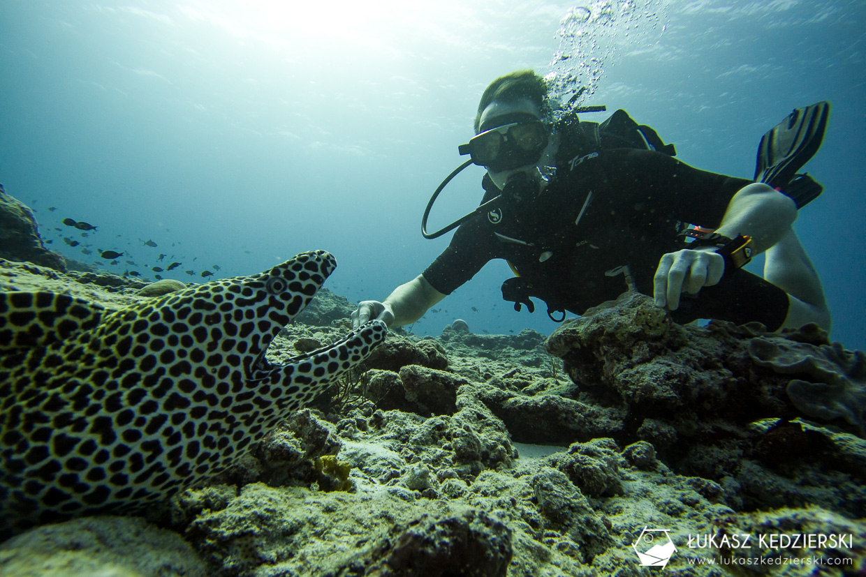 nurkowanie na malediwach thulusdhoo diving murena