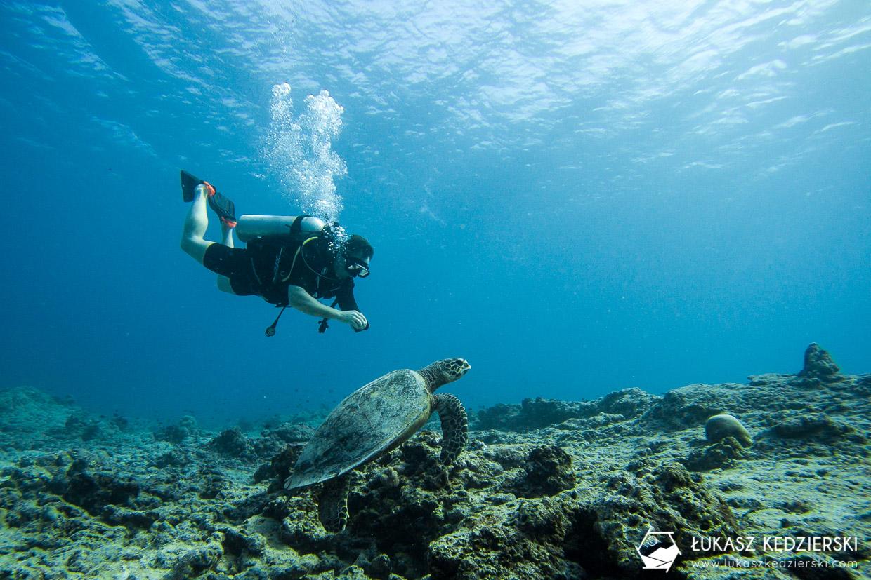 nurkowanie na malediwach thulusdhoo diving żółw turtle