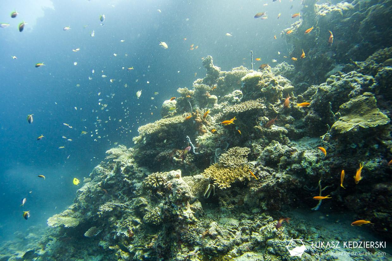 malediwy nurkowanie gulhi nurkowanie na malediwach