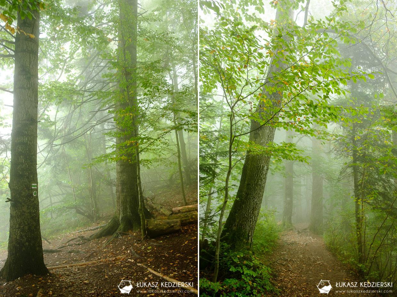 pieniny sokolica zielony szlak mgły wschód słońca