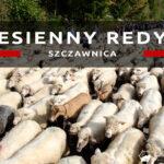 Jesienny redyk ulicami Szczawnicy